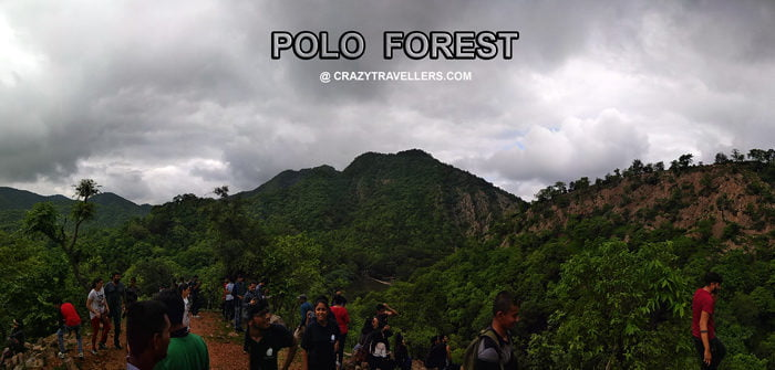 Polo-Forest